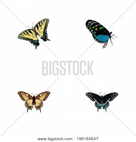 Realistic Hairstreak, Tiger Swallowtail, Morpho Hecuba And Other Vector Elements