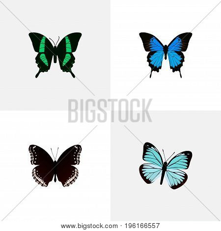 Realistic Common Blue, Spicebush, Beauty Fly And Other Vector Elements