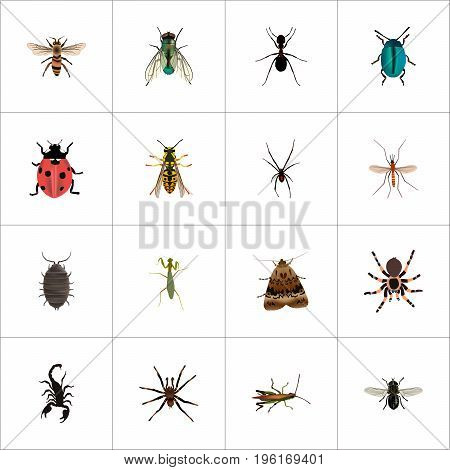Realistic Wasp, Arachnid, Midge And Other Vector Elements