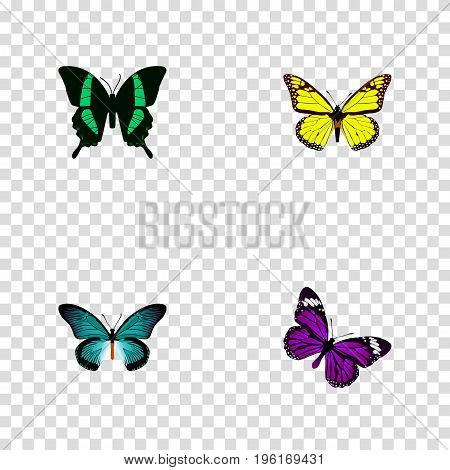 Realistic Archippus, Pipevine, Beauty Fly And Other Vector Elements