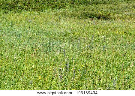Mountain herbage in East Kazakhstan. Beautiful landscape