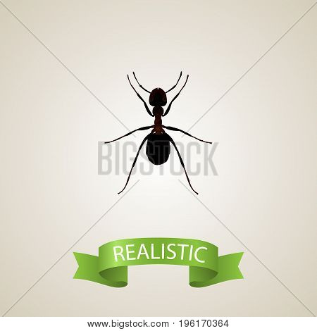 Realistic Pismire Element. Vector Illustration Of Realistic Ant Isolated On Clean Background