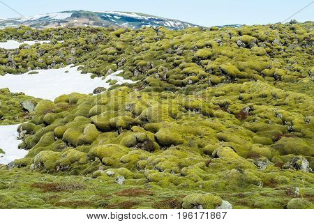 The Icelandic lava moss field in Kirkjubaerjarklaustur village in the south of Iceland.