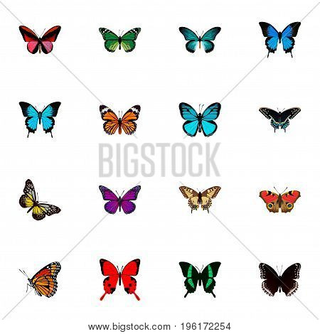 Realistic Summer Insect, Pipevine, Common Blue And Other Vector Elements