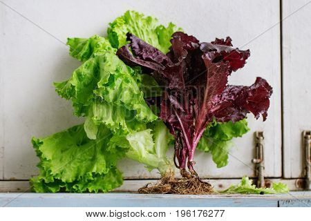 Fresh green and purple leaf salad with root over old blue white wooden kitchen table. Rustic style, day light.