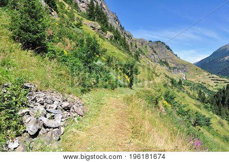 footpath in alpine greenery mountain in summer