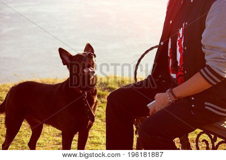 Black Dog Looking On Man