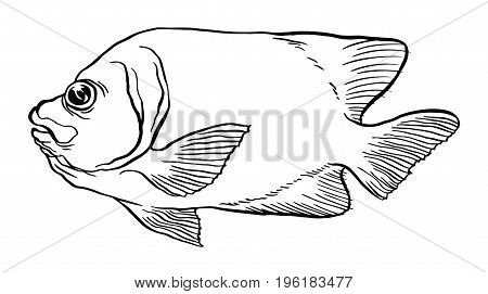 Tropical Fish - Vector hand drawing illustration with lettering on background for design