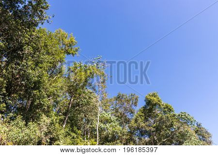 Tropical forest edge near the national park area under the clear blue sky on the high mountain