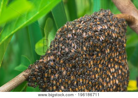 Close up of the working bees with honey cells on tree. bees working on honeycomb.