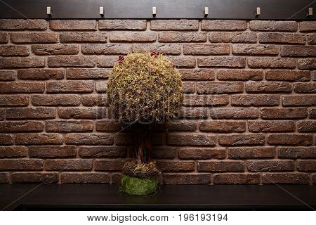 Beige brick wall and little tree in green cup on wood table