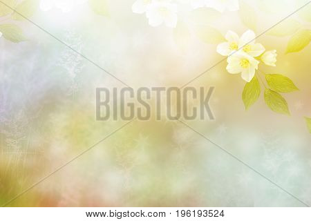 Blurred image of grass. White jasmine. The branch delicate spring flowers