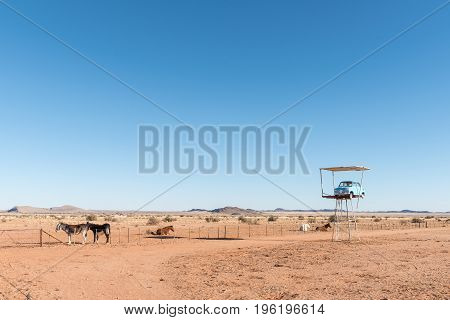 KAKAMAS SOUTH AFRICA - JUNE 13 2017: Two donkeys three horses and a vintage car next to the N14 road between Kakamas and Pofadder in the Northern Cape Province