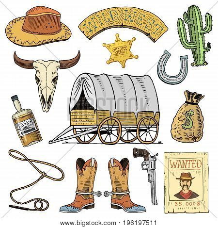 Wild west, rodeo show, cowboy or indians with lasso. hat and gun, cactus with sheriff star and bison, boot with horseshoe and wanted poster. engraved hand drawn in old sketch or and vintage style