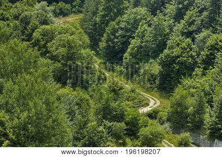 Forest with various trees and road in summer at  Central Balkan mountain, Stara Planina, Bulgaria