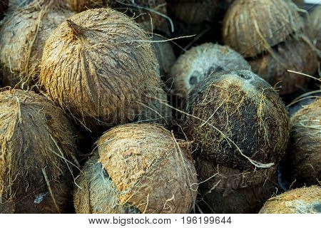 Huge pile of cracked in half empty coconuts shells husks collected for recycling rough hairy texture asia india thailand Spain