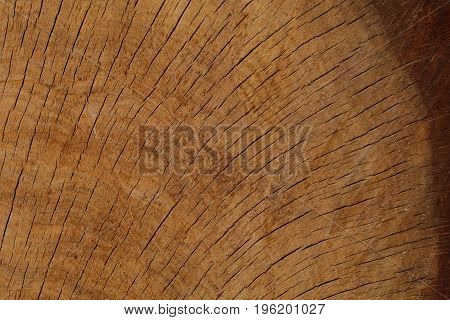 A quarter section of an old oak shows curving lines.