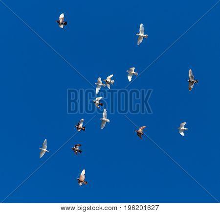 A flock of pigeons on a blue sky .
