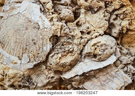Fossilized Remains Of Seashells