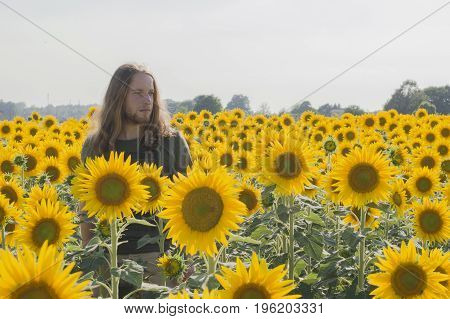 Young caucasian - nordic man with blond and long hairs among sunflowers field