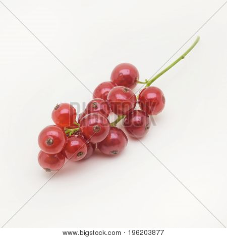 Brush of fresh red currant isolated on white background