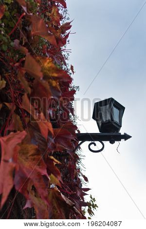 Old fashion lantern surrouded with red leaves at autumn, Kalemegdan fortress in Belgrade, Serbia