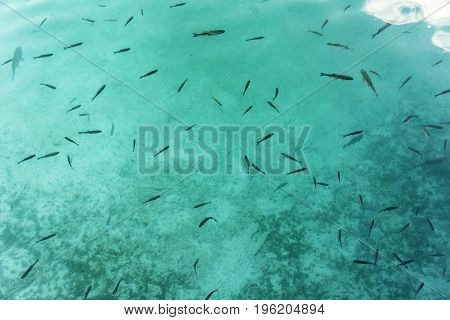 top view of fishes swimming in shallow river with pebble bottom