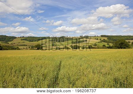 Oat Field And Scenery