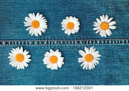 Six daisies on a jeans background of light blue denim