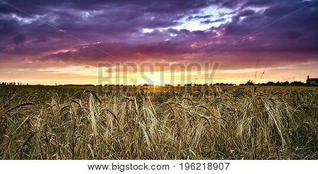 Sun setting on wheat fields in rural England