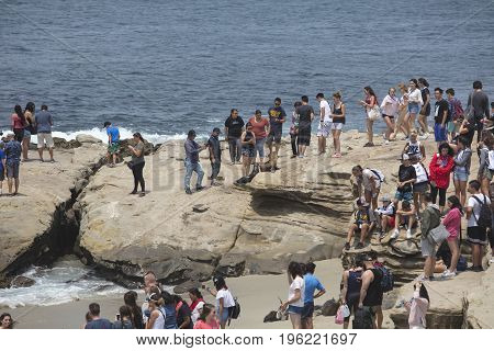 LA JOLLA, CALIFORNIA/USA - JULY 15, 2017:  Crowd of people interacting with the seals on the beach at La Jolla, California
