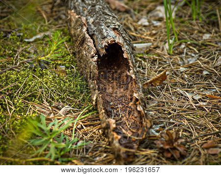 Piece of a hollow tree trunk with a dark tunnel hole
