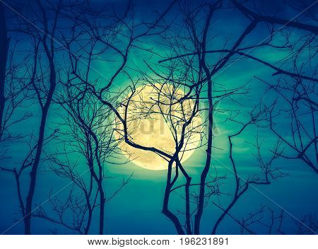 Night Landscape Of Sky With Super Moon Behind Silhouette Of Dead Tree. Cross Process.