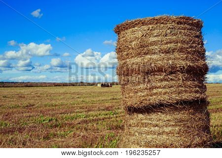 Harvested  wheat field in august on a sunny day