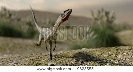 3d rendering of the running coelophysis dinosaurus
