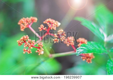red flower with green leaf in early summer