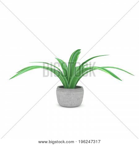 plant or houseplant in ceramic pot in 3D rendering