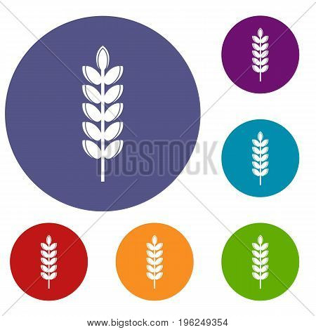 Big grain spike icons set in flat circle red, blue and green color for web