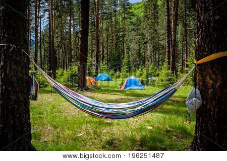 Tents And Hammock In A Pine Forest