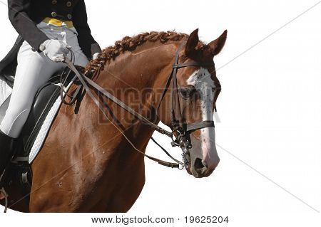 caballo aislado en blanco