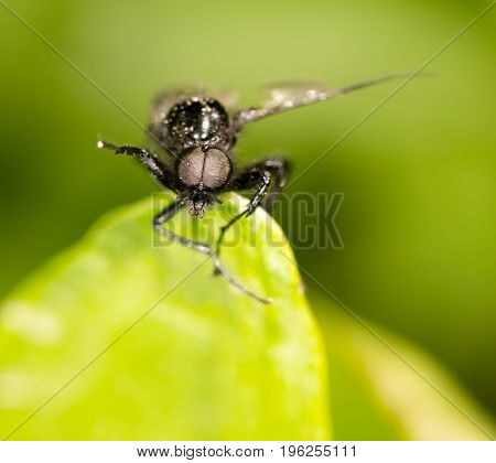 portrait of a fly on a green leaf. close