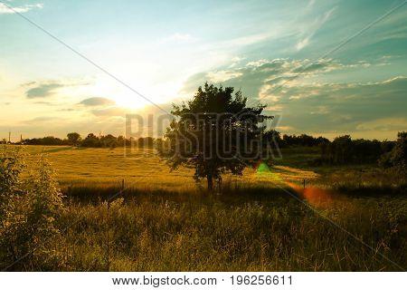 Lonely tree on the field tonight. Beautiful sunset