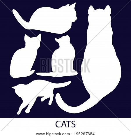 Vector silhouette of cat and kitten isolated from background. Color set of home pet