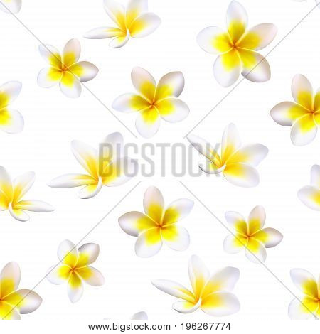 Plumeria Tropical Flowers. Seamless Pattern Background. Vector.