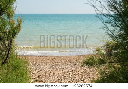 View of the sea with shingle beach through Tamarisk bushes at Ferring near Worthing West Sussex England