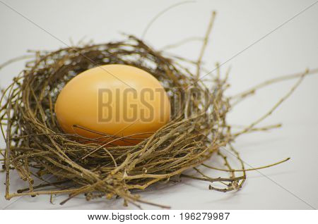 The egg in bird nest made from twigs from nature. Isolated on white background. Residence.