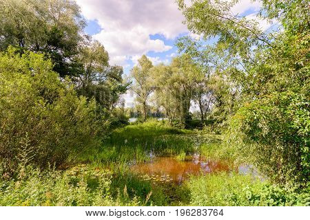 Pond Covered By Water Lilies