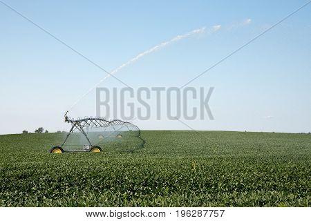 Watering a soybean field on a farm.