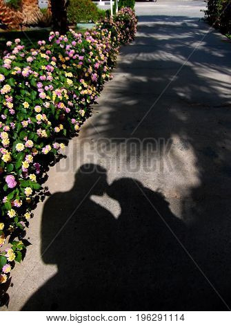 Shadow on the path. A man and a woman kiss under the palm trees.