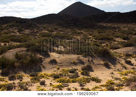Yellow sand on desert landscape. Panorama view. Fuerteventura, Canary islands, Spain